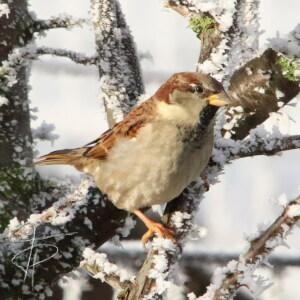 Tanja Petri
